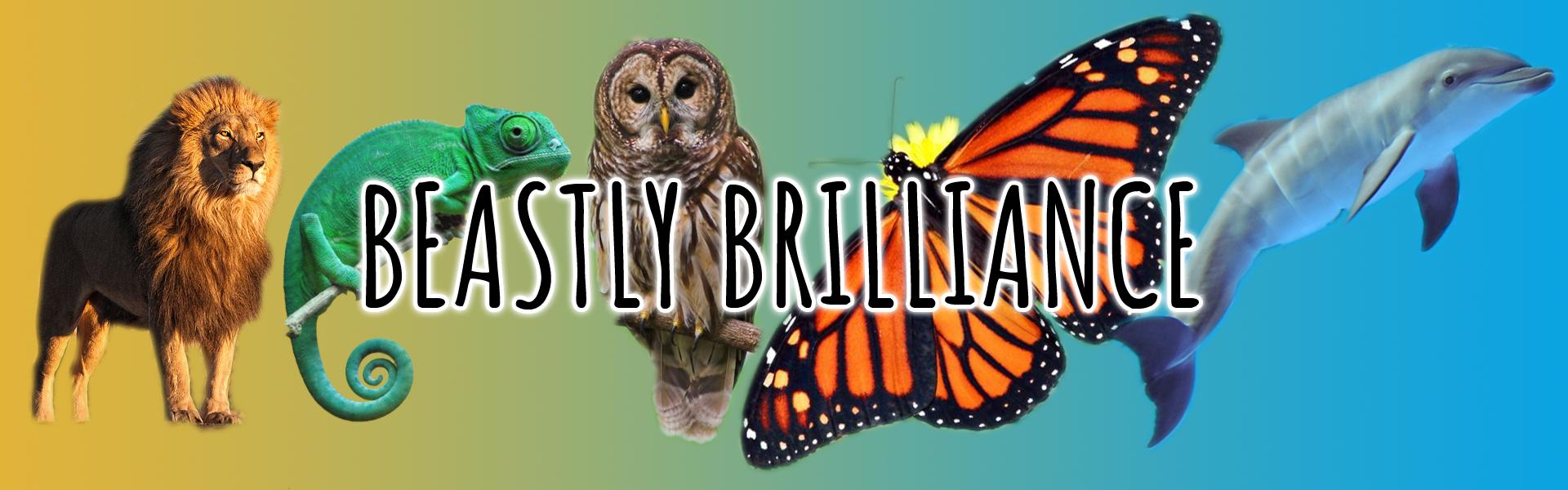 Beastly Brilliance Header Banner